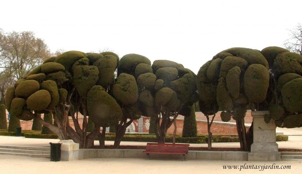 Arte topiario-El Jardín del Parterre en el Parque del Buen Retiro.
