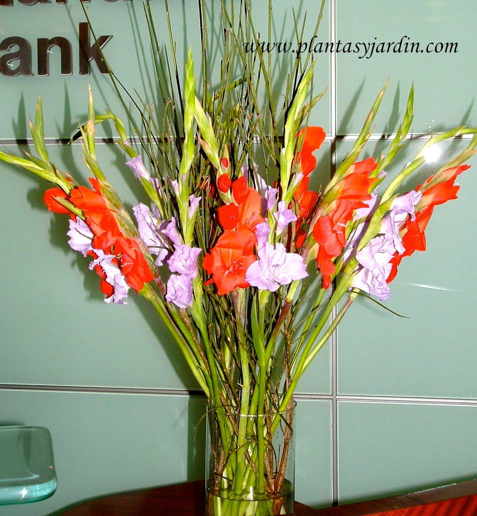Gladiolos rojos y lilas, como flor de corte en un bouquet floral, con Retama.