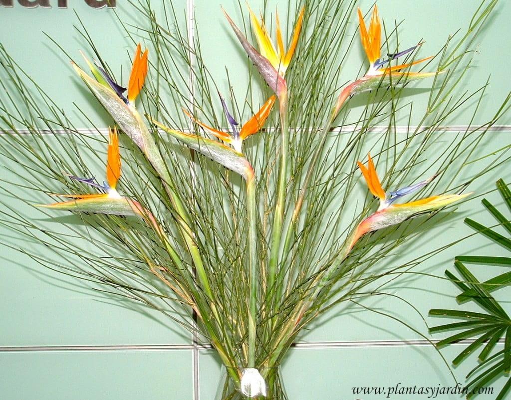 Strelitzias con Retama en arreglo floral