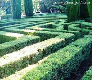 laberinto de Buxus recortados en los Jardines de Sabatini-Madrid.