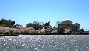 Memorial Jefferson durante el Festival Nacional de los Cerezos en Washington D.C. Foto: Wikipedia.