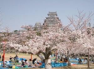 Castillo Himeji-Sakura. Foto: Wikipedia.