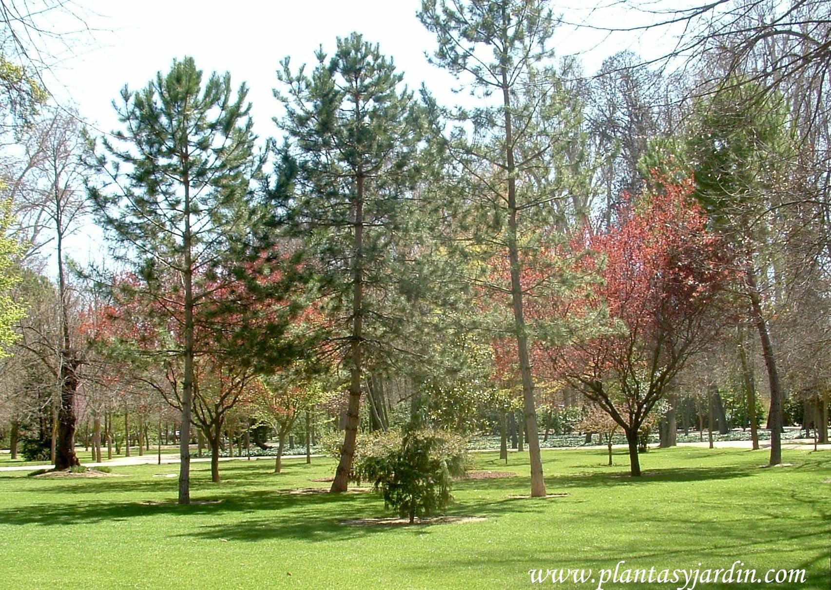 Jardín del Príncipe en los Jardines Reales de Aranjuez-Madrid.