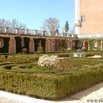 camino secundario, bordeado por Prunus-Cerezos, en el Jardín del Príncipe-Aranjuez-Madrid.