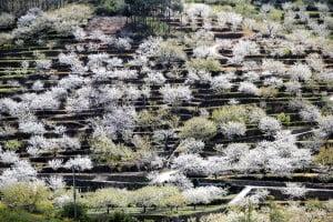 Valle del Jerte, floración de los Cerezos. Foto: Villafotoblog.