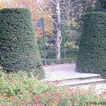parterre de Lantana camara con Taxus baccata en topiario.