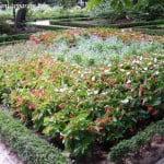 parterres con plantines en el Real Jardin Botanico de Madrid