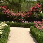 parterres y Rosas trepadoras en el Rosedal del Parque del Buen Retiro