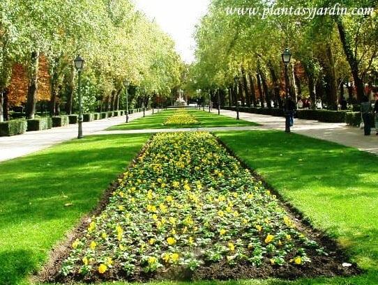 plantines de temporada Pensamientos amarillos, la entrada del Buen Retiro