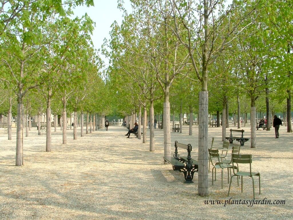espacio estanco, especie de bosquecillo, que brinda un espacio de descanso y sombra en verano y permite el acceso del sol en invierno