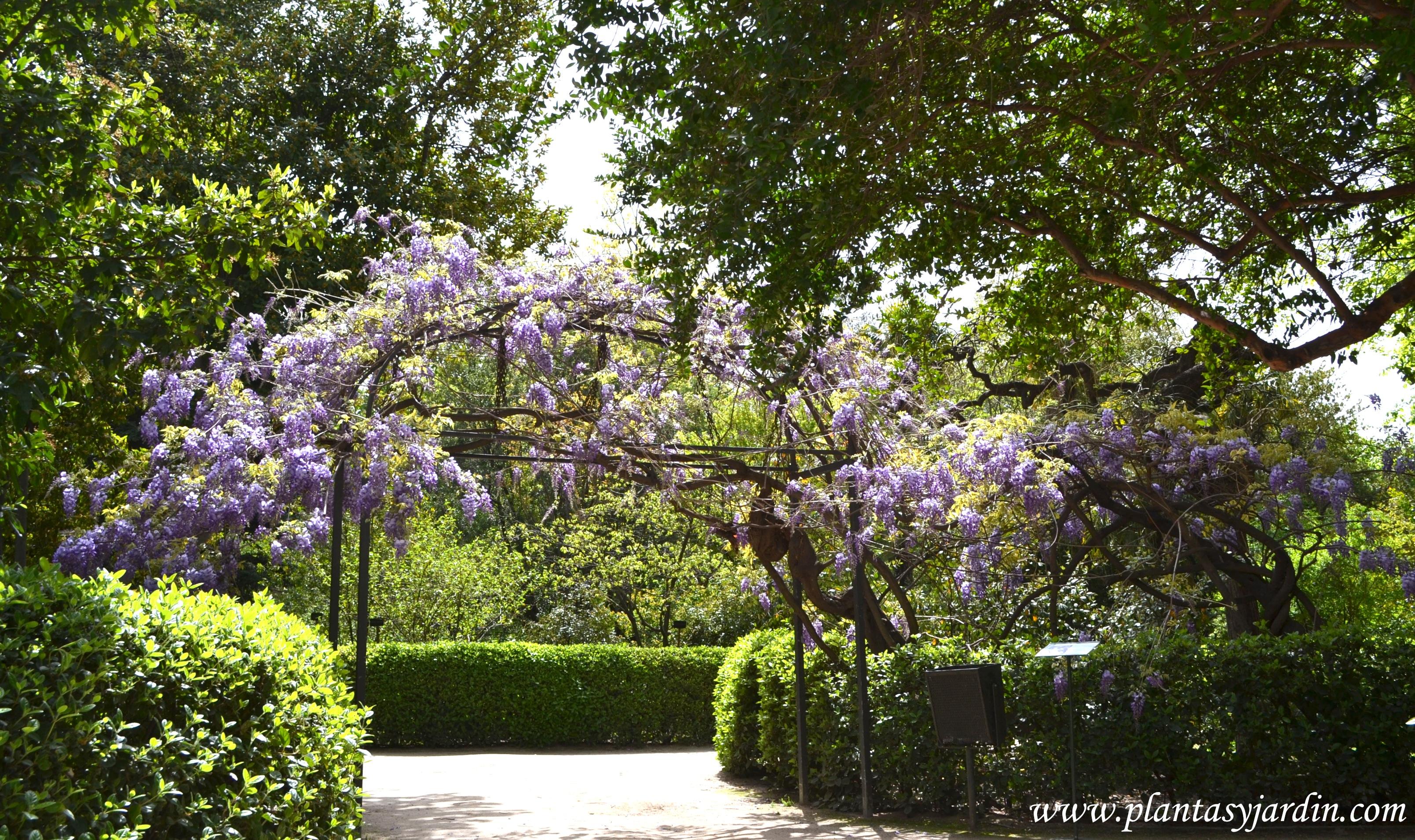 Glicina ejemplar de 230 toneladas de peso en el real for Plantas de un jardin botanico