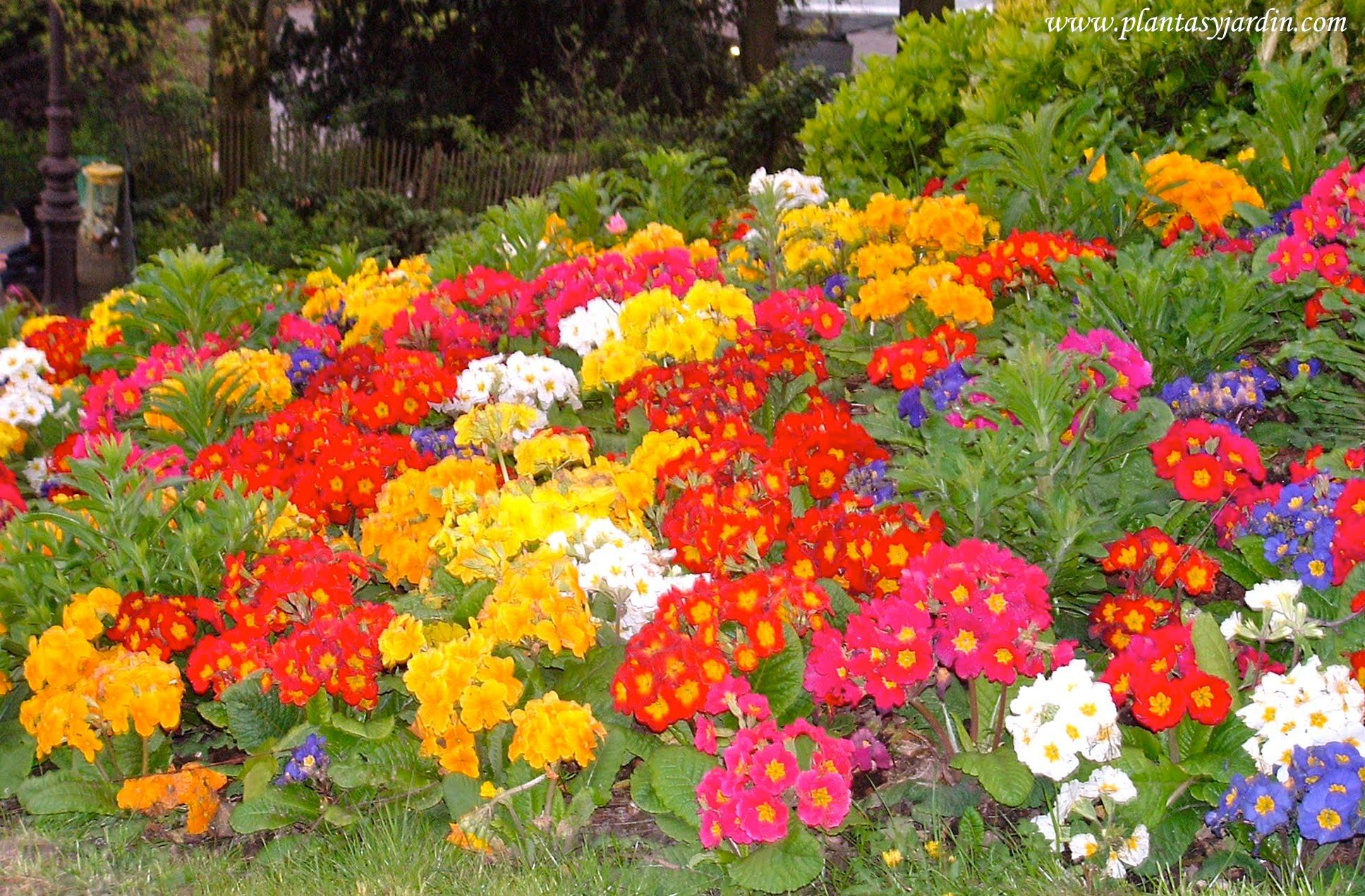 Plantas de temporada anuales bienales plantas jard n - Arriate plantas ...
