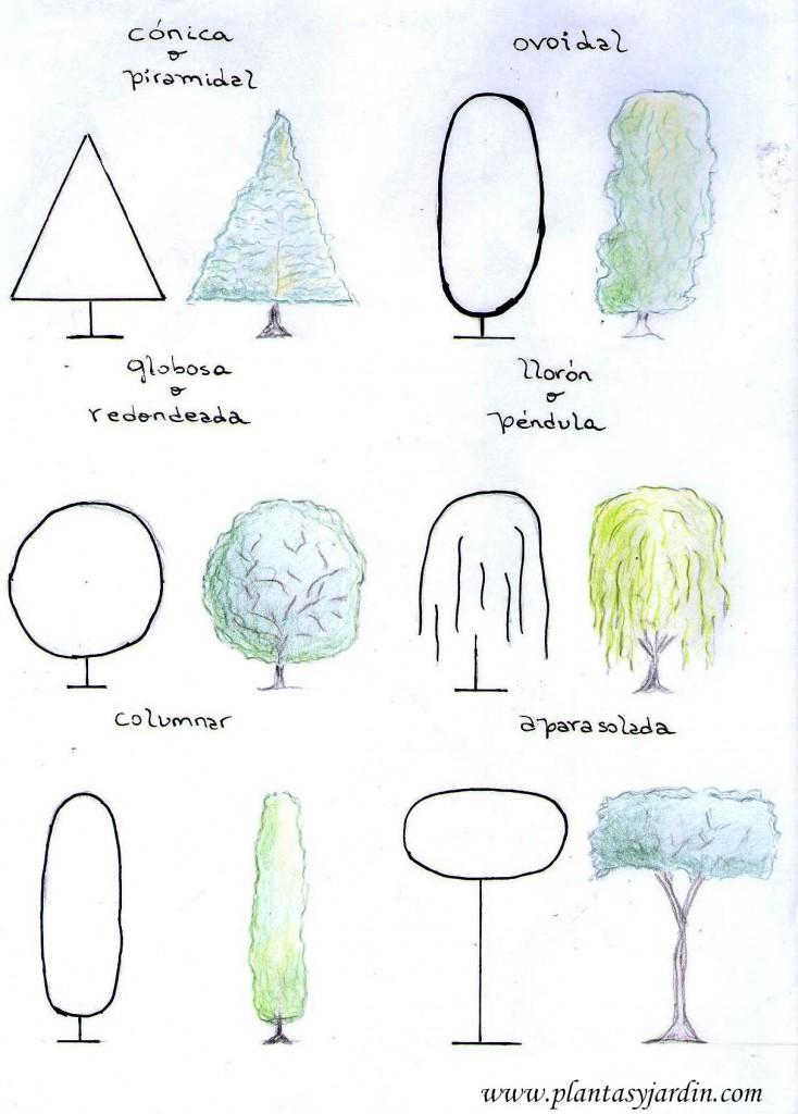 las formas de los árboles