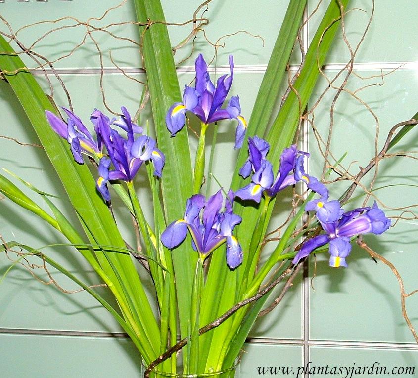Iris bouquet floral con Sauce eléctrico.