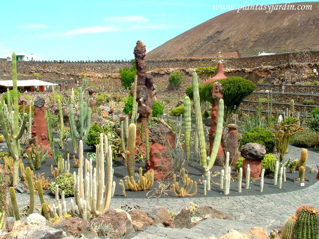 Jardín de Cactus & Crasas, creación del artista lanzaroteño César Manrique.