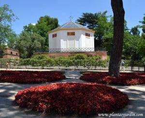 """macizos florales de Begonia semperflorens en el Casino de Baile de el Jardín """"El Capricho"""" en Madrid"""