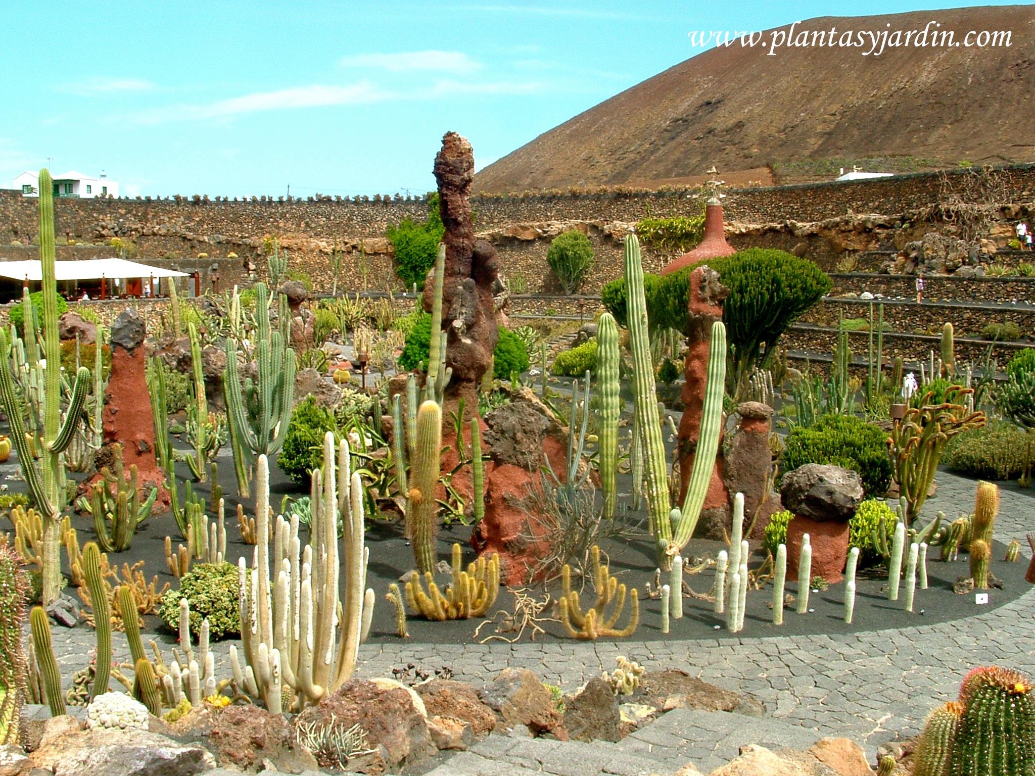 ardín de Cactus de César Manrique en la isla de Lanzarote-Islas Canarias-España.