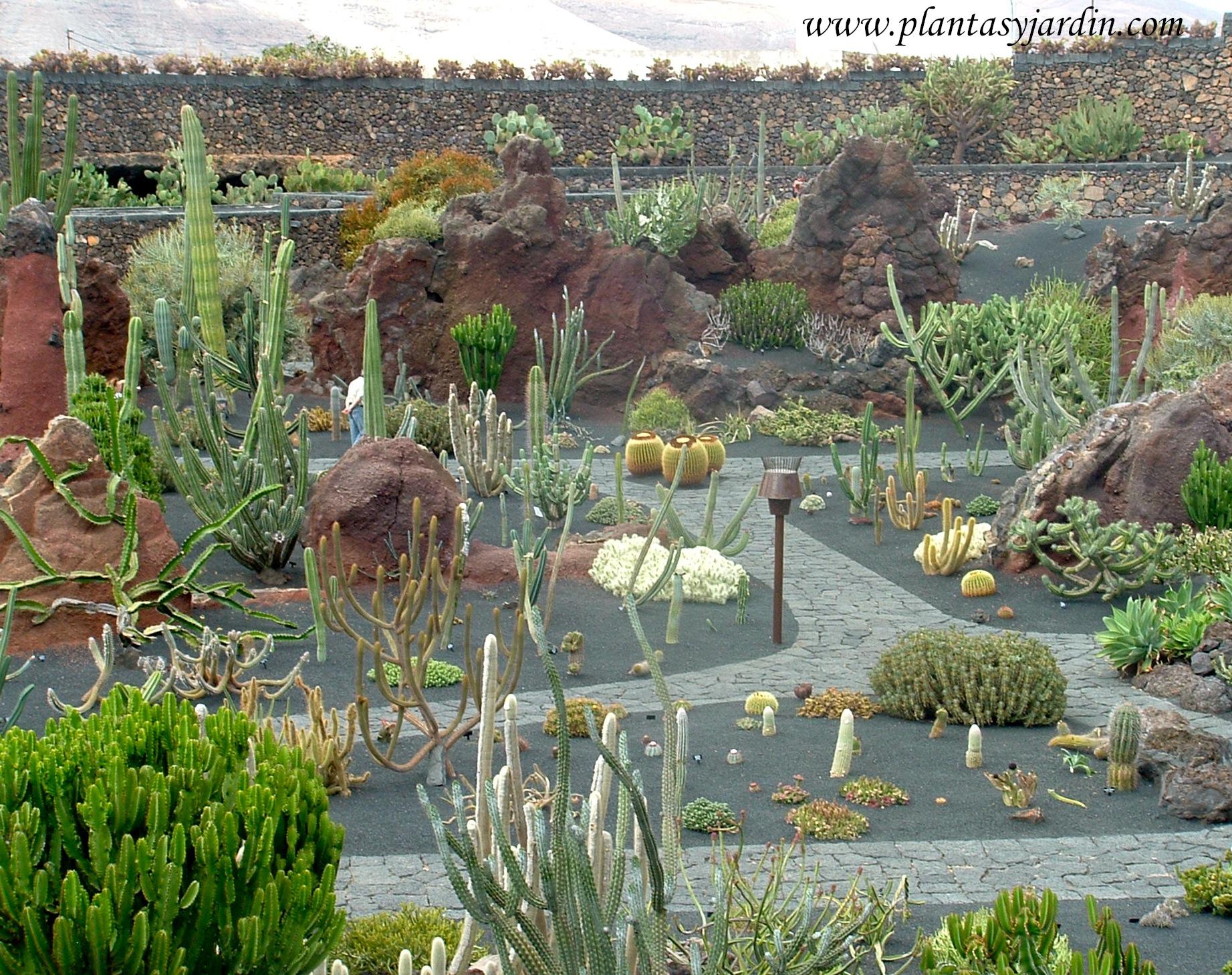 Colecci n de cactus diversas formas en el jard n de for Jardines con cactus