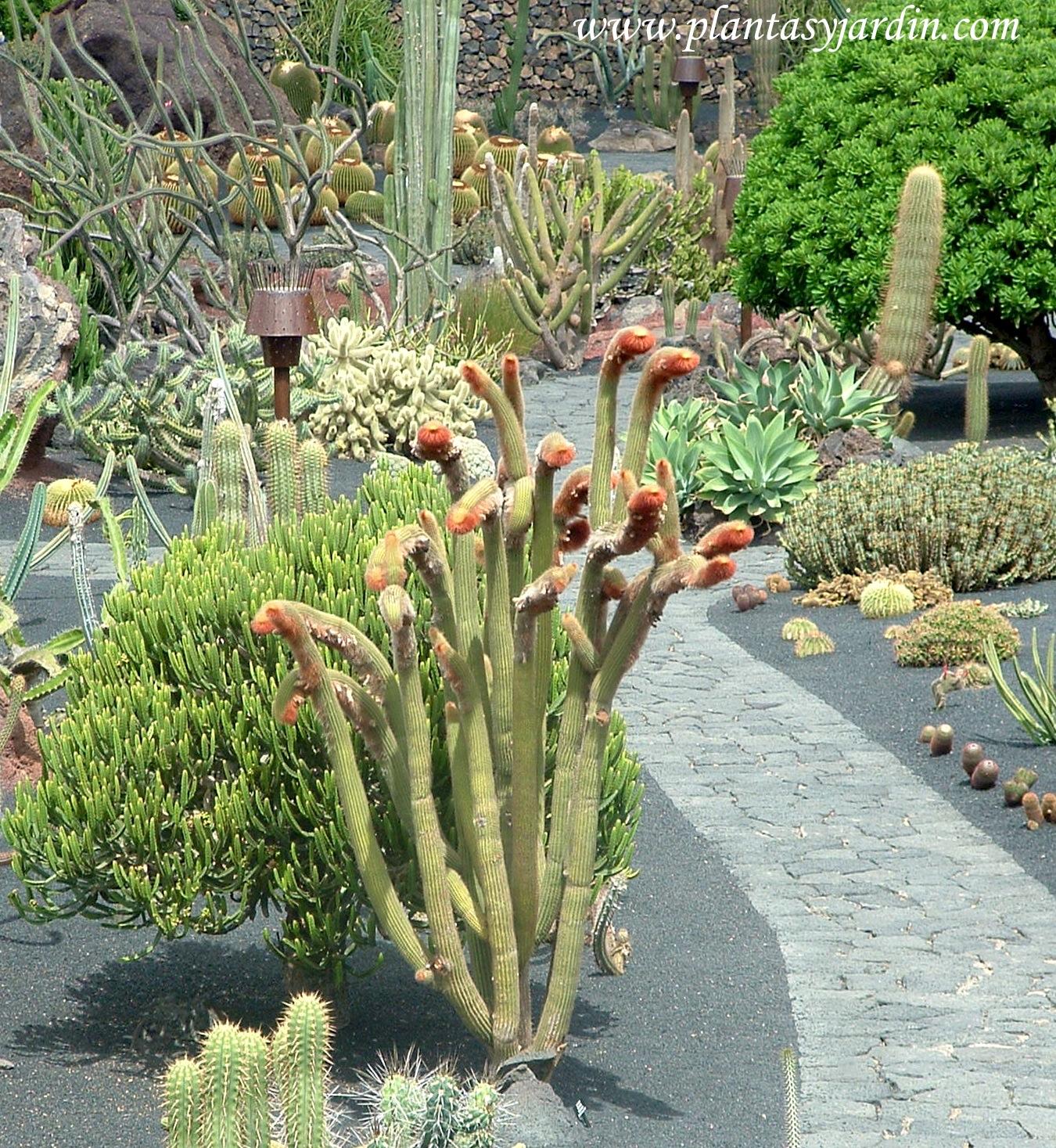 Jardines De Cactaceas Terraza De Cactus Y Crasas De Marin Jardin