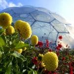 Biomo al aire libre. Miles de diferentes plantas cultivadas. Foto: edenproyect.com