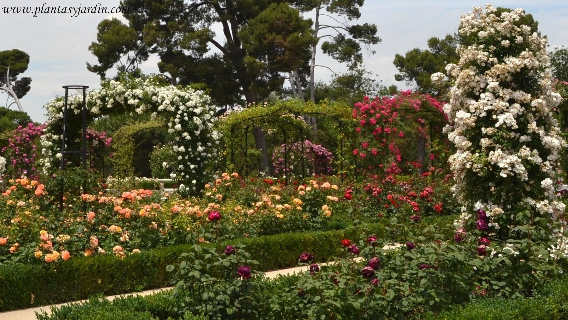 el Rosedal del Parque del Buen Retiro en Madrid, florecido en la primavera