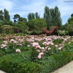 parterres de Rosas en el Rosedal del Parque del Buen Retiro-Madrid.