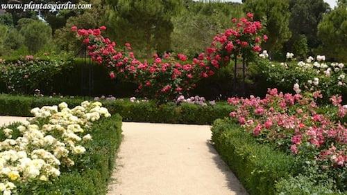 parterres de Rosas & Rosas trepadoras en el Rosedal del Parque del Buen Retiro.