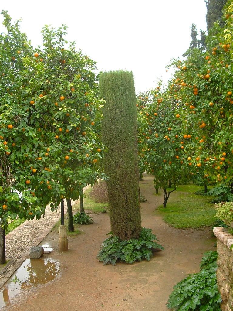 frutos de los Naranjos, contrastes de formas y texturas