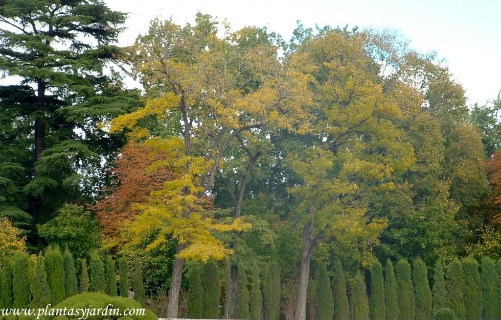 colores otoñales contraste de especies caducas y perennes