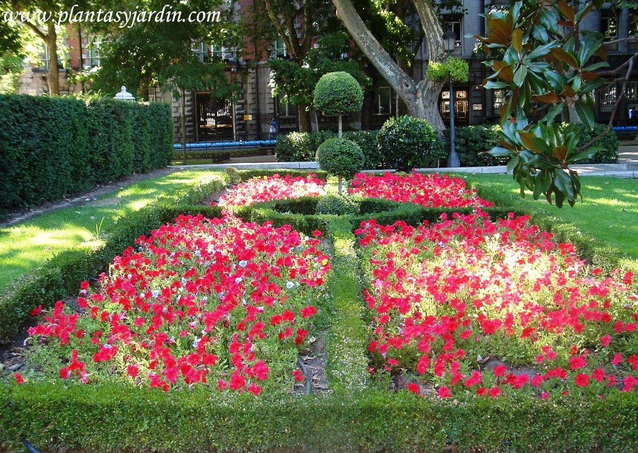 Parterres con Petunias rojas y ejemplar destacado en arte topiario.