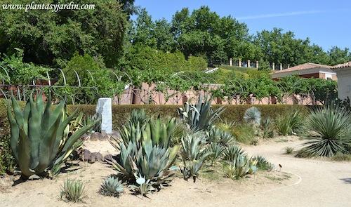 Real jard n bot nico de madrid plantas y jard n - Jardin de cactus madrid ...