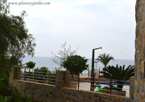 Terrazas frente a la 1º línea del mar, Cycas & Ficus benjamina.