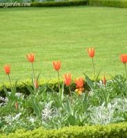 El Césped en el Jardín-Pasos para la Implantación