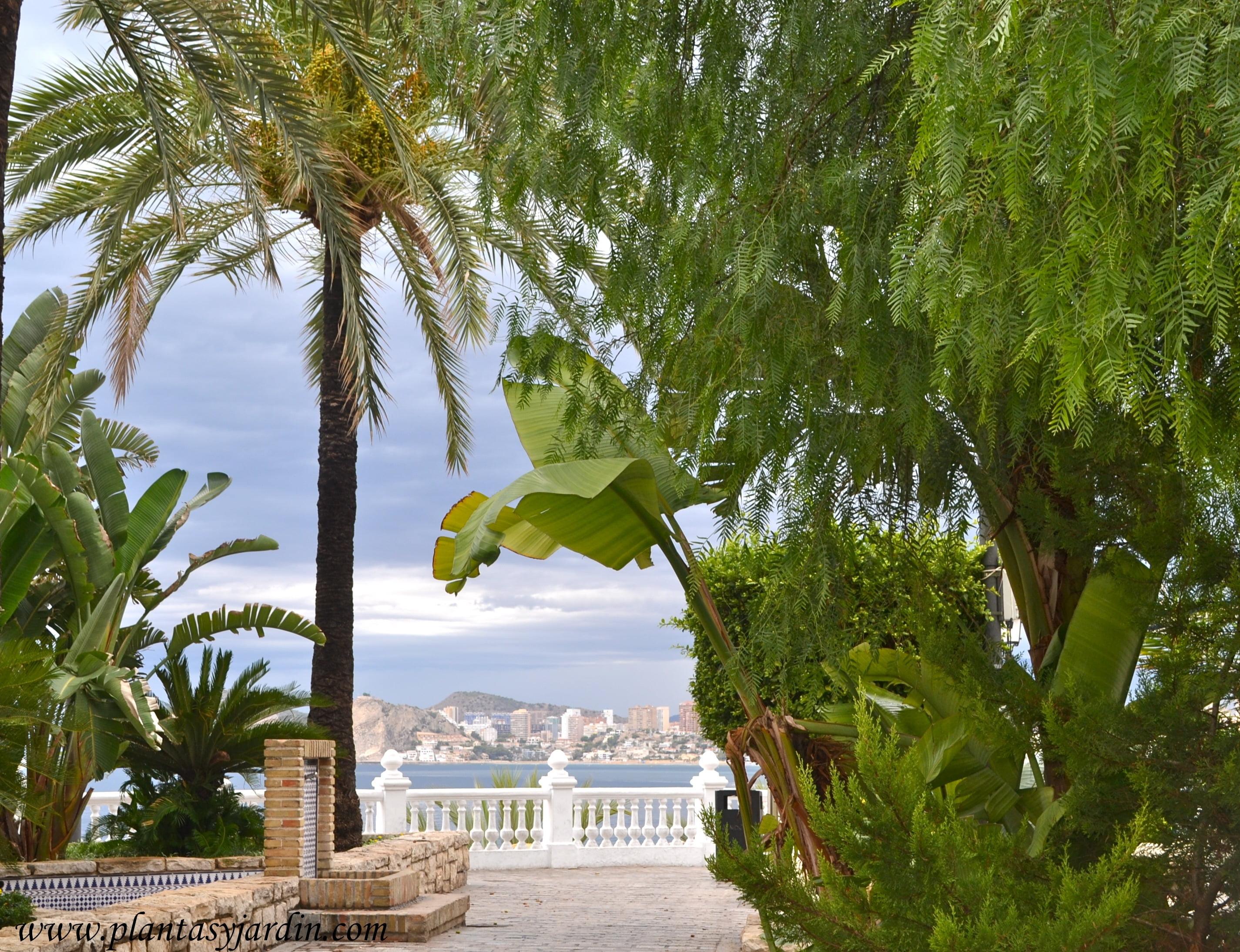 jardines junto al mar, Mussa, Schinus & Phoenix.