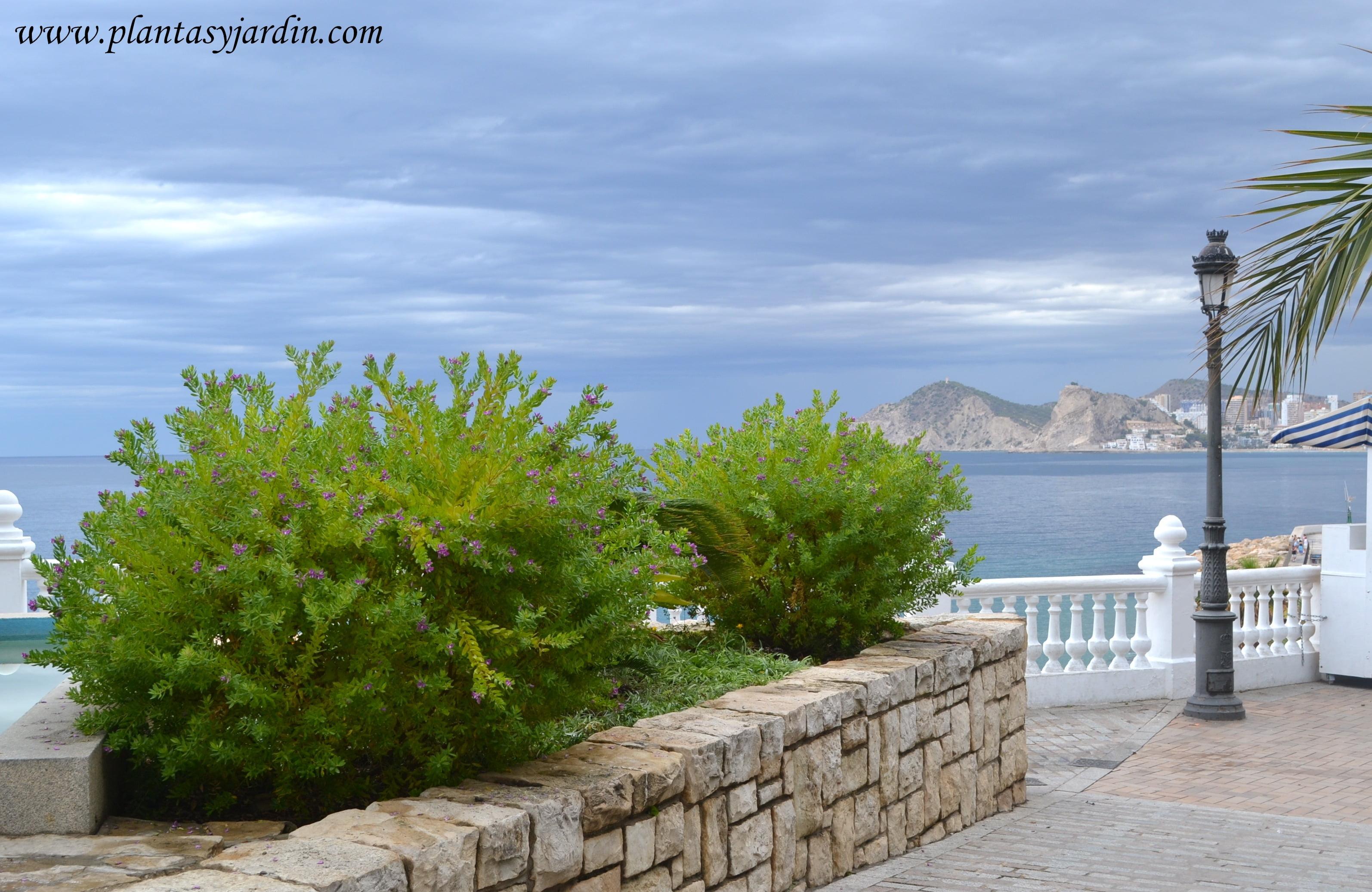 Jardines junto al mar plantas para zonas costeras for Arbustos enanos para jardin