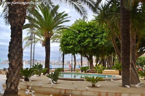 parque frente al mar mediterráneo, Strelitzia, Phoenix y Cycas
