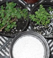 Qué es turba y perlita, esta planta es tóxica, cómo se reproduce ?