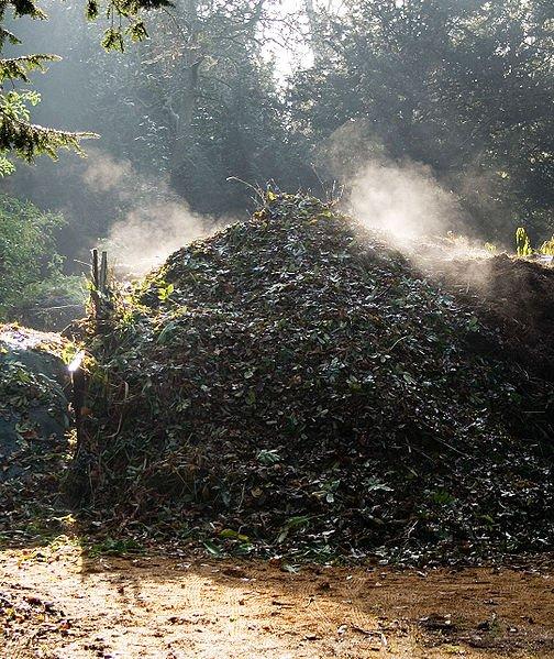 pila de compost, el cambio de Tº del día a la noche, produce vapor. Foto: Wikipedia.
