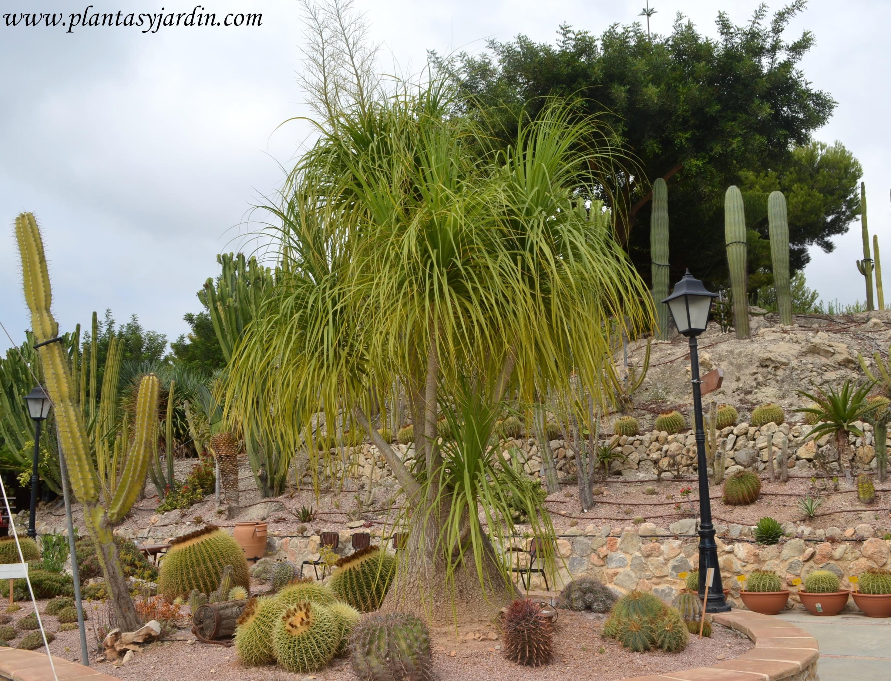 rboles ornamentales para Jardines peque os