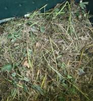 Prepara tu propio Compost, un fertilizante orgánico