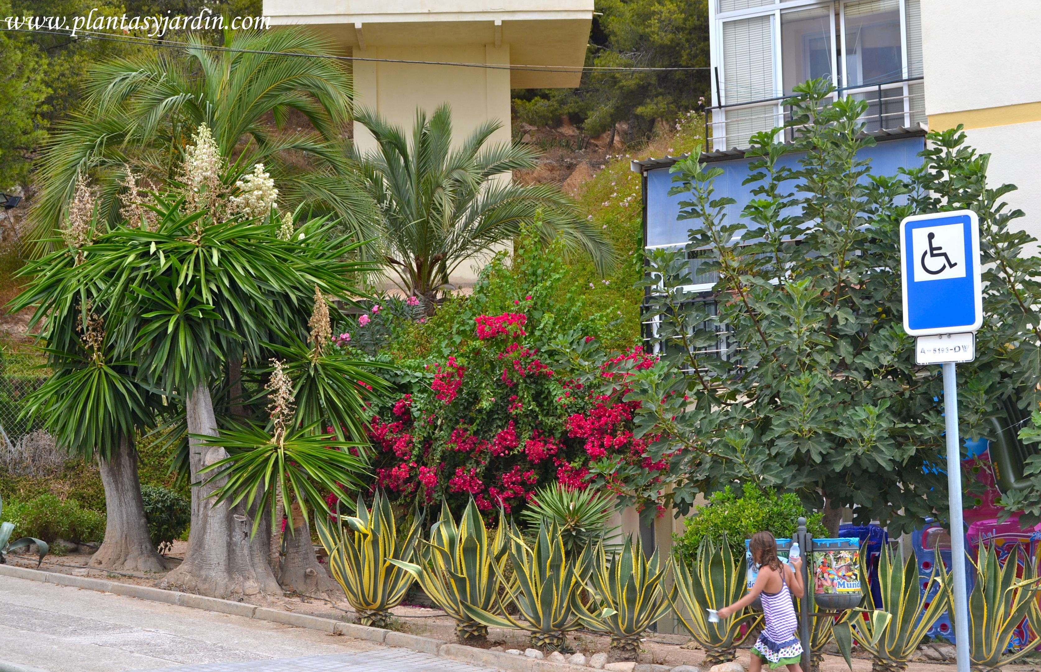 Agave g nero de plantas suculentas y carnosas plantas for Jardines de bajo mantenimiento