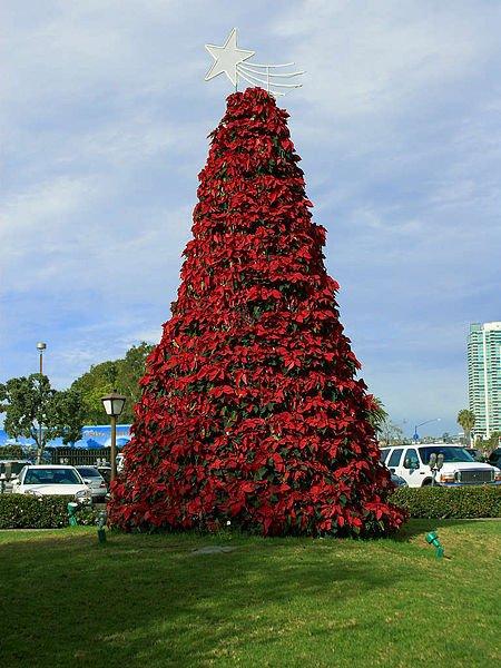árbol de navidad de Poinsettias. Foto: Wikipedia.