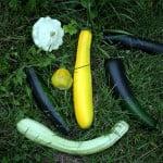 variedades de calabacines. Foto: Wikipedia.