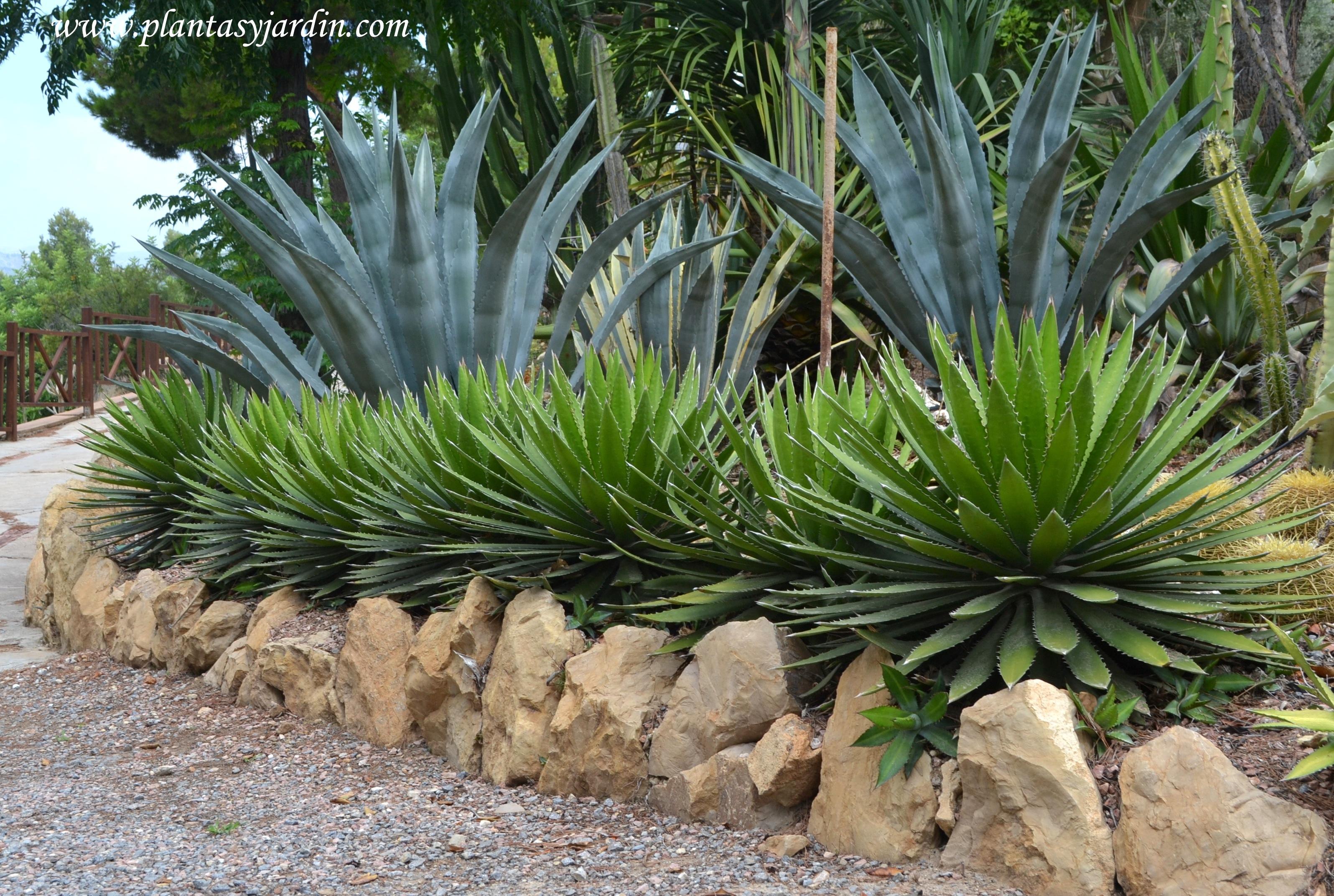 Jardines junto al mar plantas para zonas costeras for Plantas pequenas para jardin
