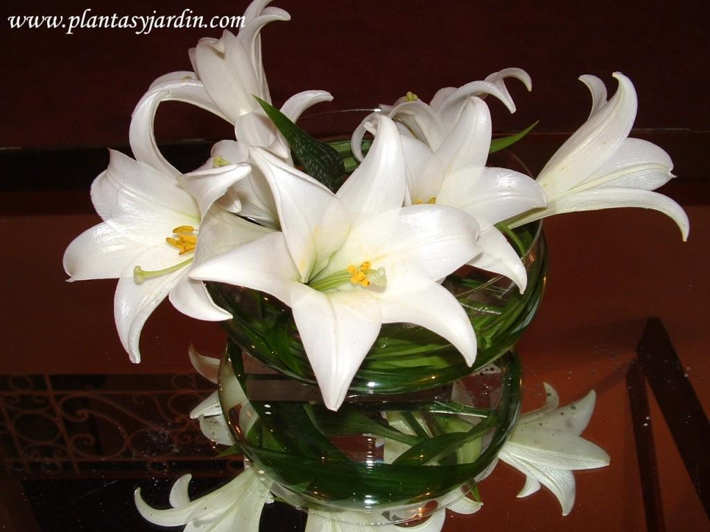 Lilium candidum con follaje de Cortadera, sobre doble base de acrílico y mesa espejada.