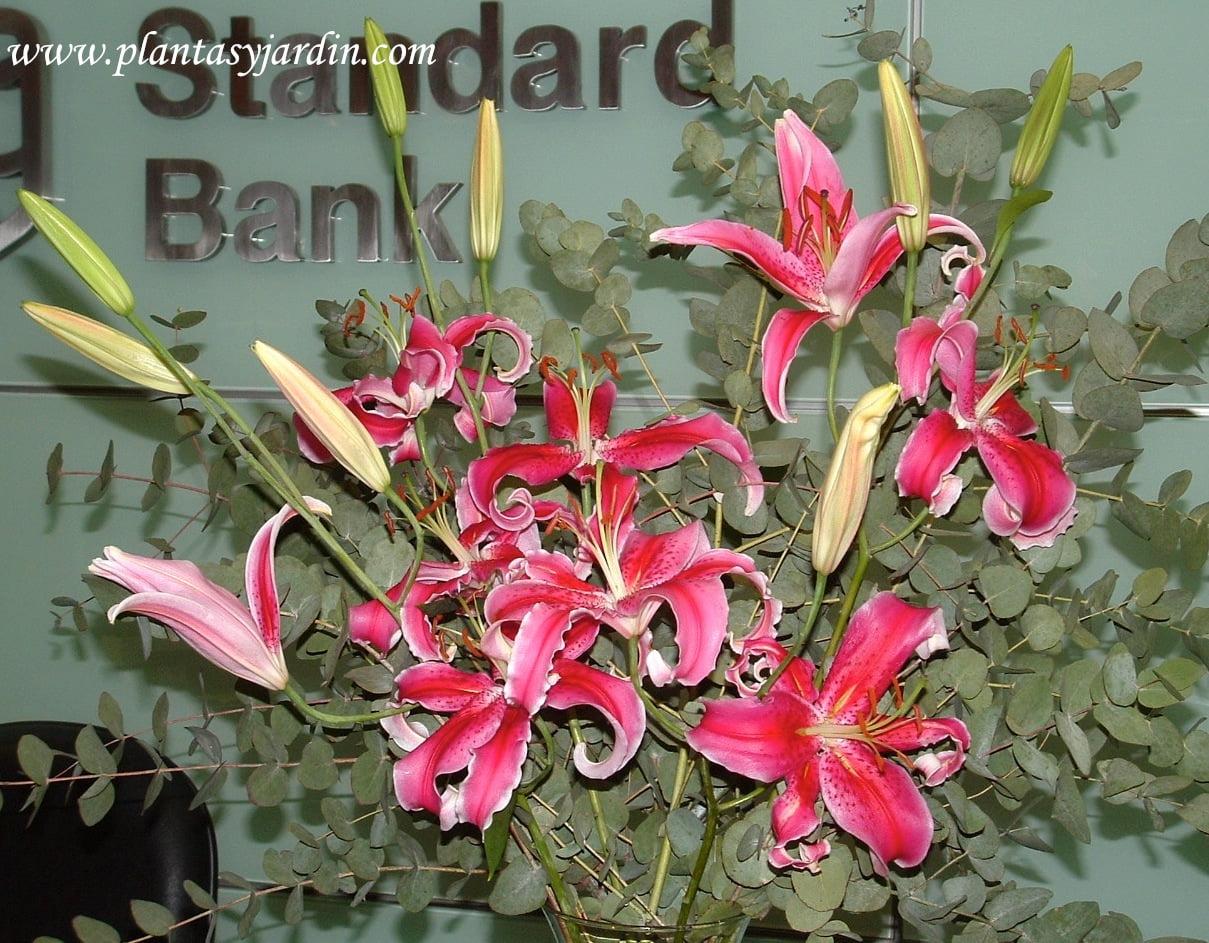 Lilium perfumados con Eucalyptus cinerea, un bouquet floral muy llamativo.