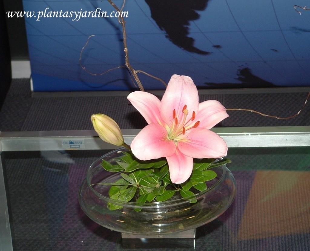 Lilium rosado en esponja floral cubierta con follaje de Pittosporum y Sauce eléctrico.