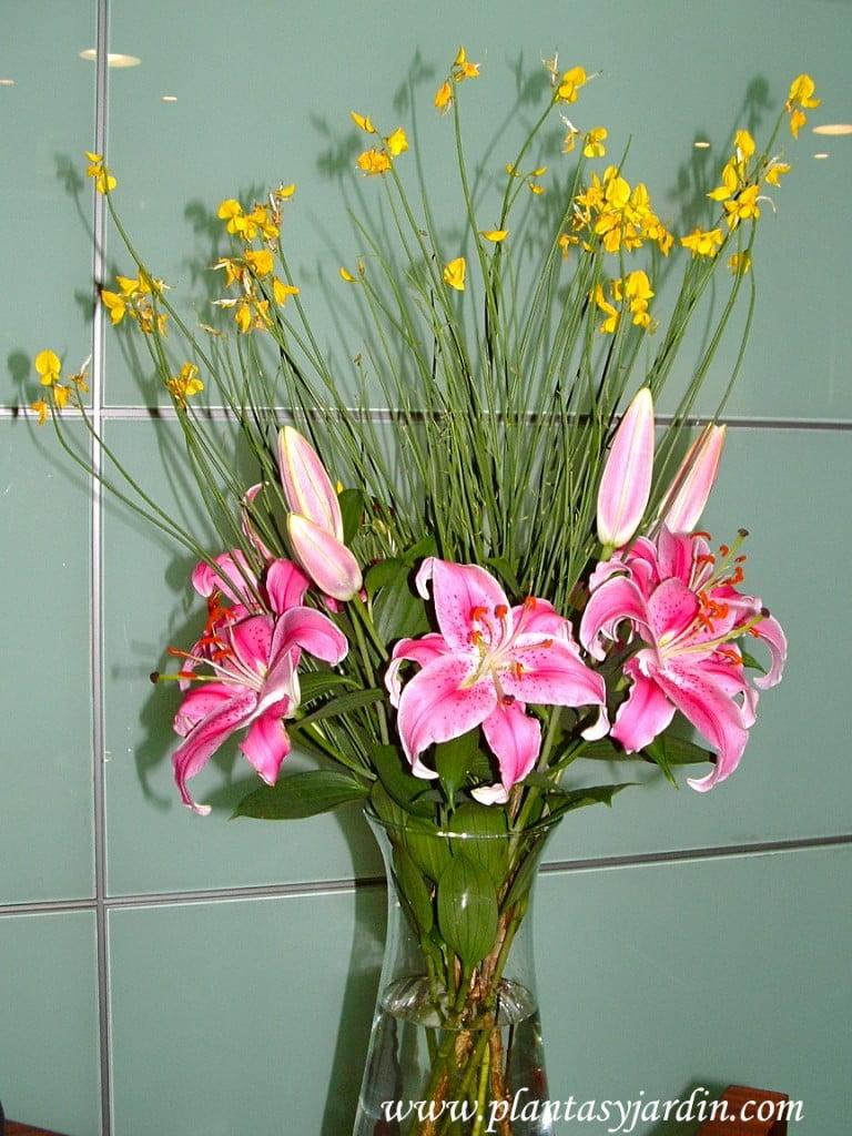 Lilium rosados perfumados.