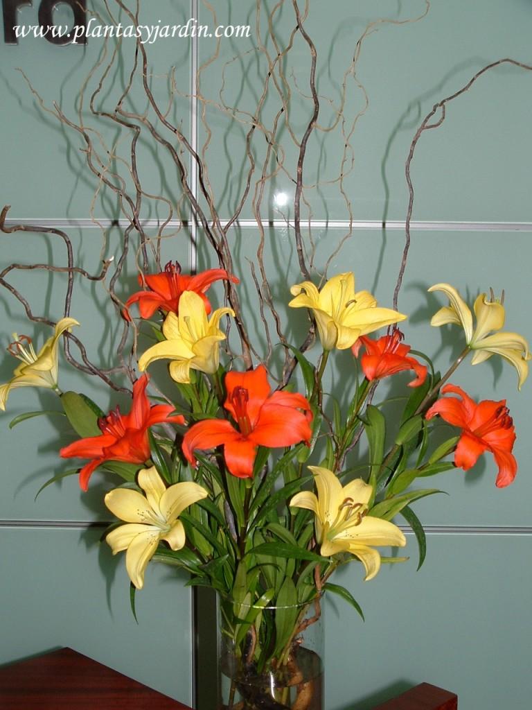 Liliums amarillos y naranjas con Sauce eléctrico.