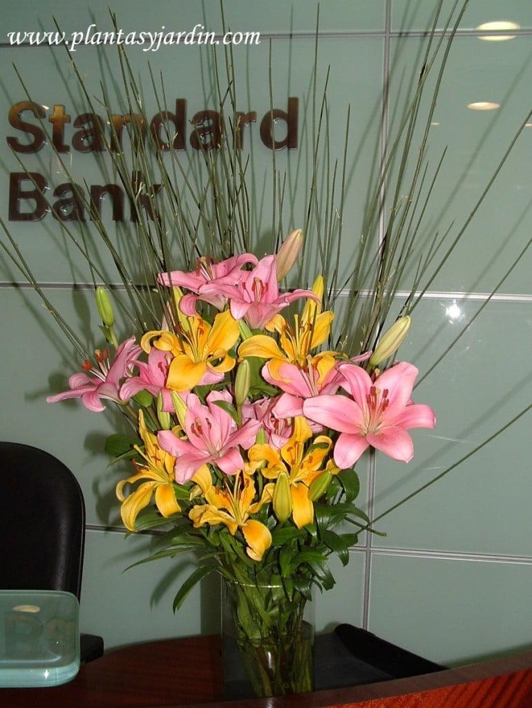 Liliums amarillos y rosas con Retama.